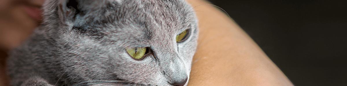 Koty do adopcji – poradnik nowego opiekuna