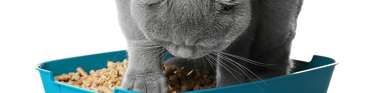 Żwirek dla kota – jak wybrać najlepszy?