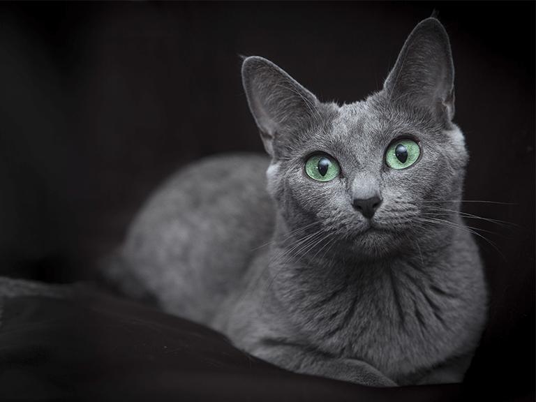 Jak karmić kota? Żywienie kociąt, kotów dorosłych i starszych