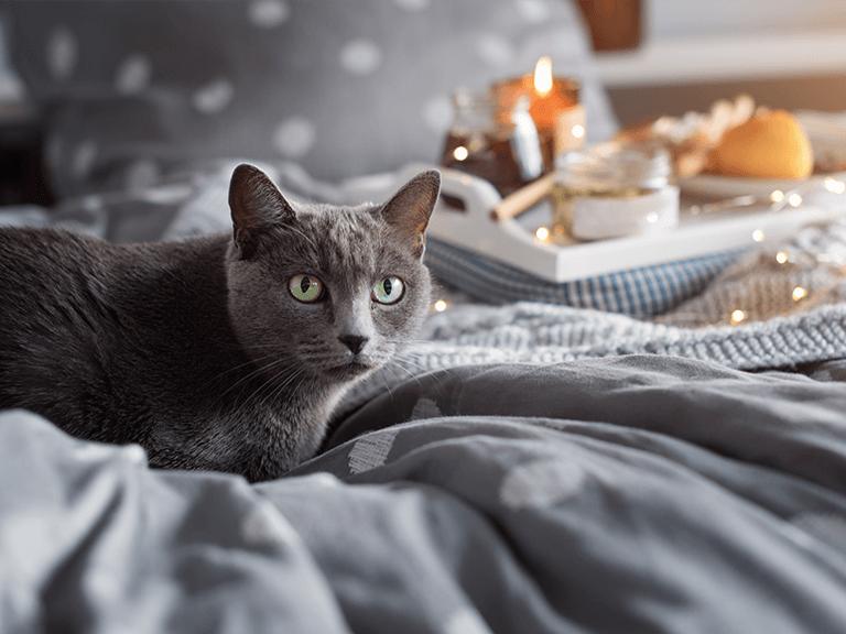 Jak wychować i zrozumieć kota?