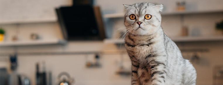Czego nie wolno podawać kotu do jedzenia?