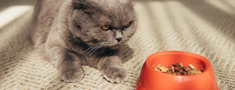 Czy karmy gotowe są bezpieczne i zdrowe dla kota?