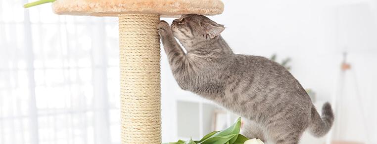 Czy każdy kot potrzebuje drapaka?