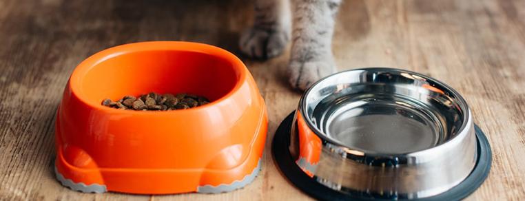 Czym jest karma pełnoporcjowa dla kota?
