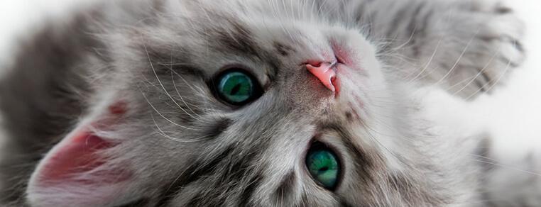 Czym karmić kota w zależności od jego wieku?