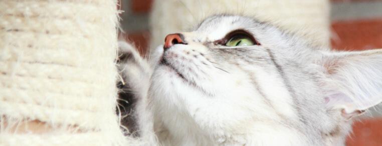 Jak dbać o pazury swojego kota?