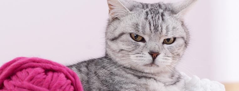 Jak najlepsze wykorzystanie czasu na zabawę z kociakiem