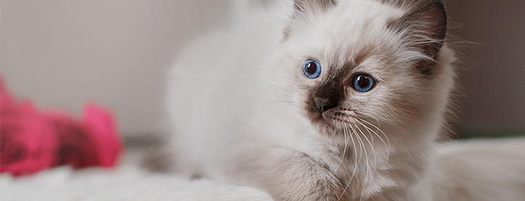 Jak przygotować dom przyjazny kotom?