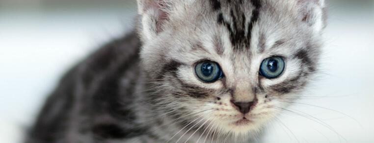 Jak przygotować się na przybycie kota