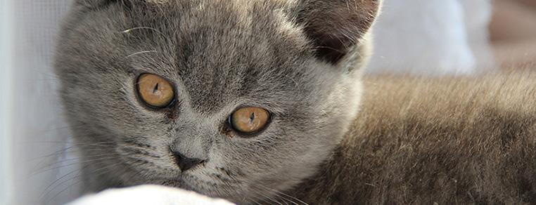 Jak przyzwyczaić kota do nowego domu?