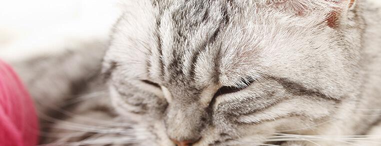 Jak zadbać o dobry sen u kota?