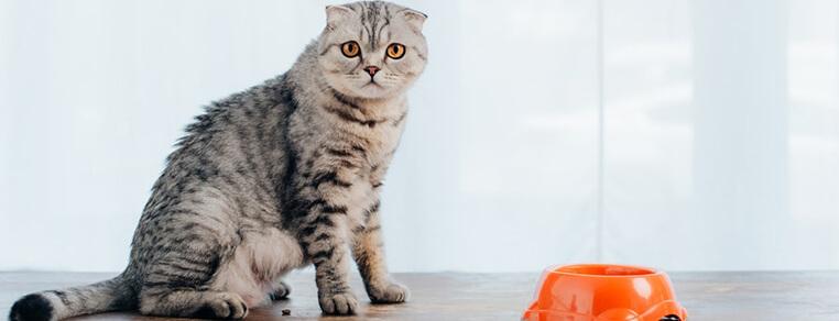 Jak żywić kota, żeby go nie przekarmić