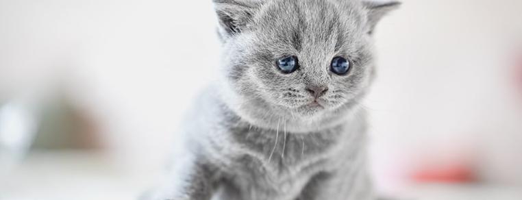 Jaką rasę kota wybrać?