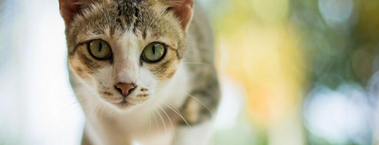 Kastracja/sterylizacja kocura i kotki