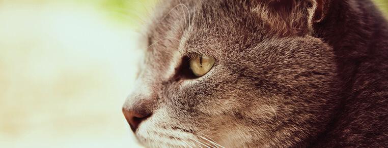 Kiedy kot staje się kocim seniorem?