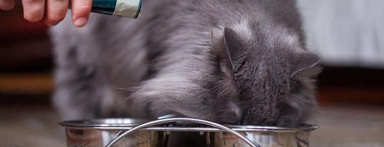 Konserwanty i przeciwutleniacze w karmach gotowych dla kotów
