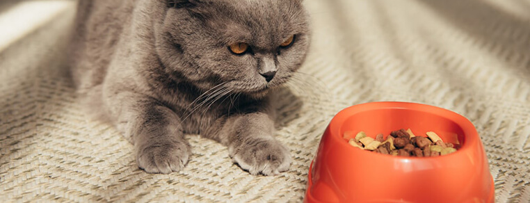 Kot nie chce jeść? Sprawdź, jakie mogą być powody braku apetytu u kota