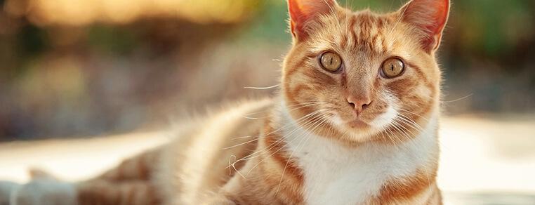 Kot w domu czy na zewnątrz?