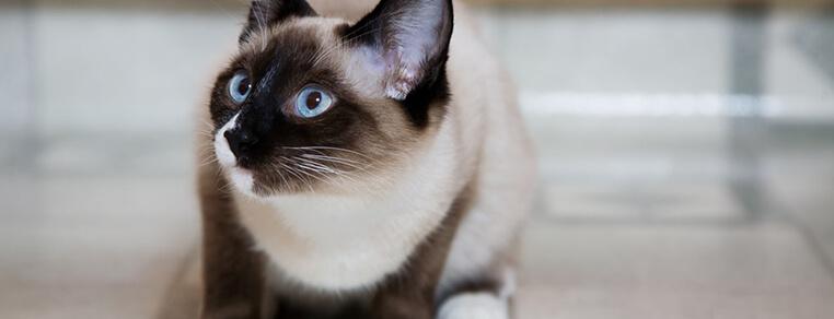 Łączenie karm suchych i mokrych w żywieniu kotów