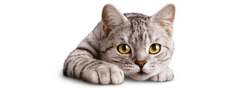 Naturalne instynkty Twojego kotka