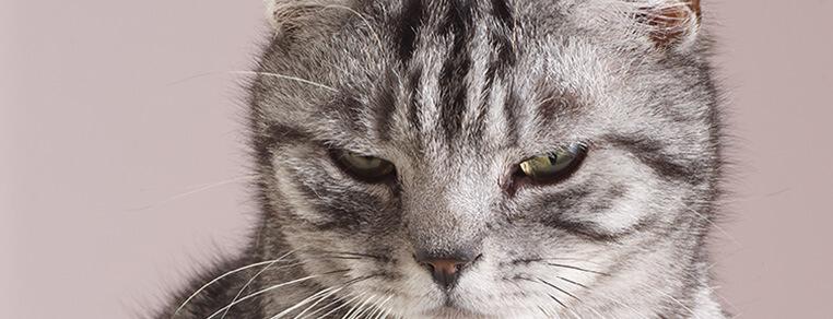 Pięć kroków do dłuższego życia Twojego kota