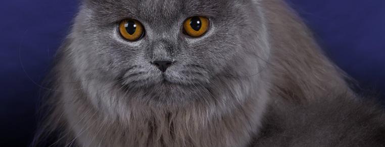 Pomocy – mam alergię na koty!