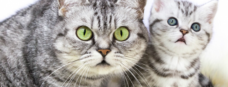 Problemy z brzuszkiem u kotka