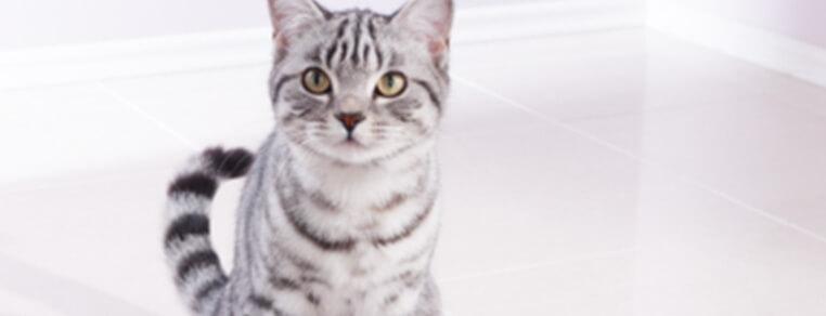 Przestawienie na jedzenie dla kotów dorosłych