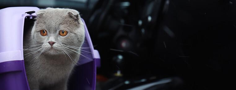 Przywiezienie kociaka do domu