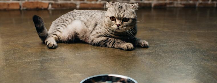 Rola wody w żywieniu kota