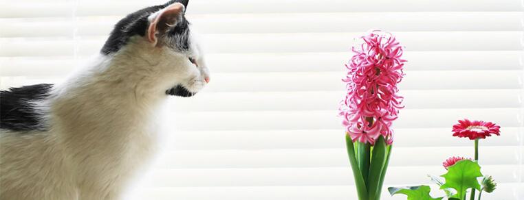 Rośliny bezpieczne dla kota - bez obaw możesz je postawić na swojej posesji