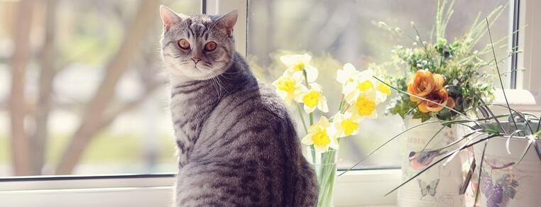 Rośliny trujące dla kota - przed czym chronić naszego małego odkrywcę?