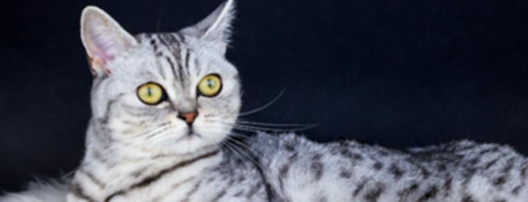 Składniki odżywcze, których potrzebują koty