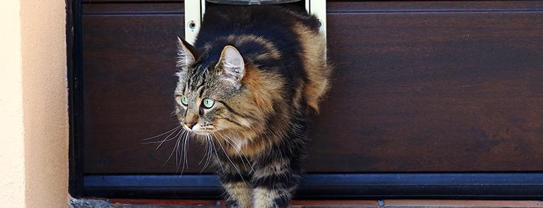 Używanie drzwiczek dla kotów