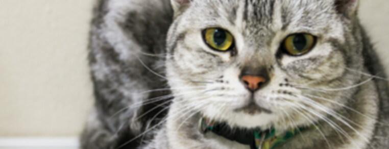 Waga kota / Masa ciała kota