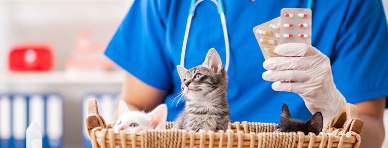 Witaminy dla kota – które z nich są najważniejsze dla zdrowia naszego podopiecznego?