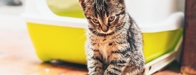 Wybór kuwety dla kota