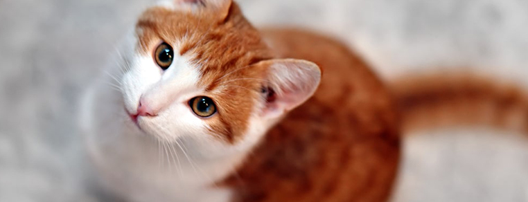 Znaczenie żywienia dla zdrowia kota