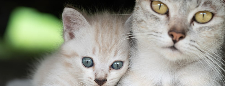 Żywienie kotek w okresie ciąży i laktacji