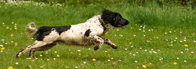 Здоровый рацион собаки