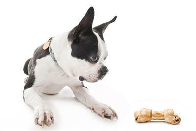 Как правильно кормить собаку на протяжении всей жизни