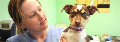 Физиология собаки: особенности, о которых нужно знать хозяину