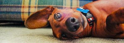 Какие необходимые вещи для щенка нужно приобрести перед тем, как брать его в дом?