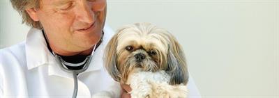 Первый прием ветеринарного врача