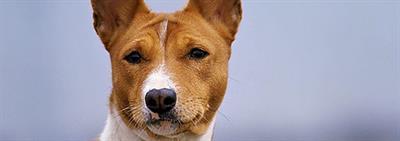 Как определить, какая порода собак подходит мне?