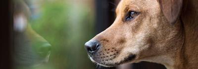 Как понять собаку?