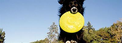 Увлекательные игры с собакой
