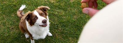 Как научить собаку команде «сидеть»?