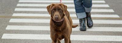 Как научить собаку команде «рядом»?