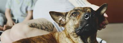 Положительное влияние собаки на человека